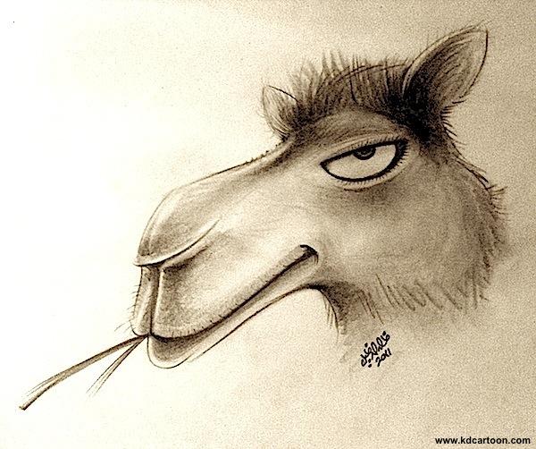 arrogant-camel