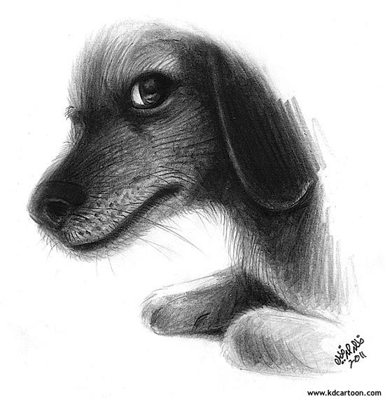dog-portrait