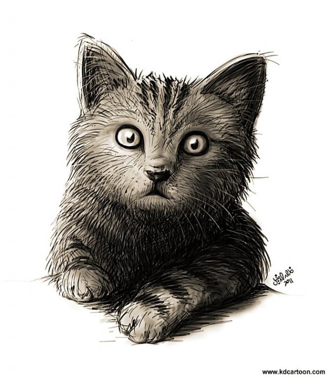 Cat Portrait بورتريه قطة