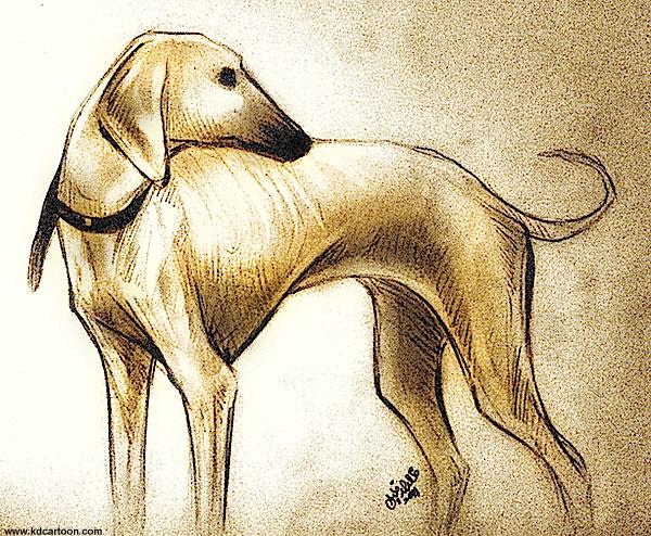 Whippet Dog كلب سلوقي