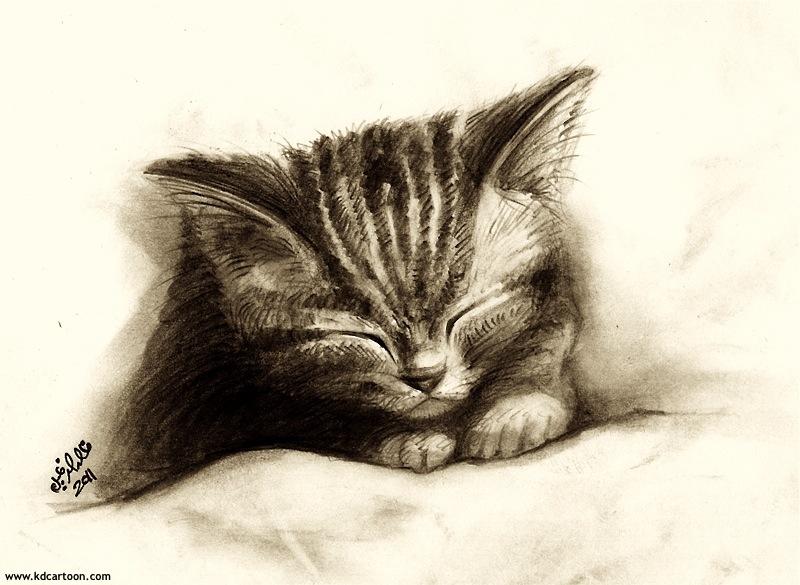 sleeping-kitten