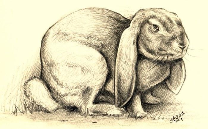 rp_big_rabbit.jpg