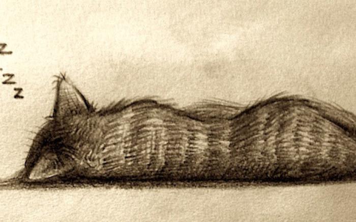 rp_sleeping_cat.jpg