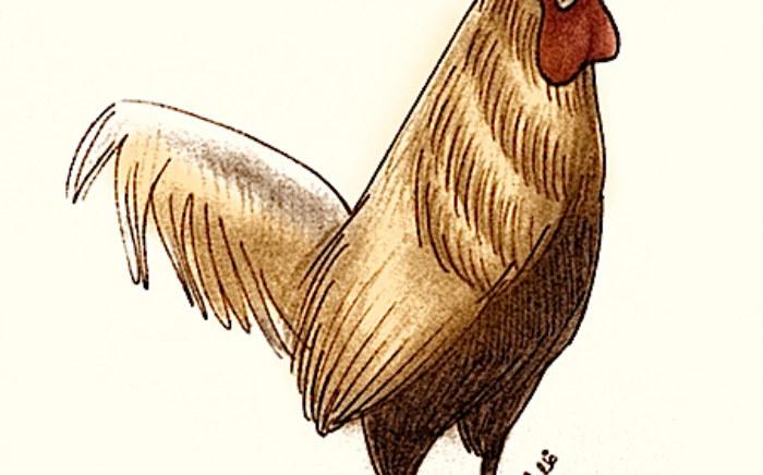 rp_rooster.jpg