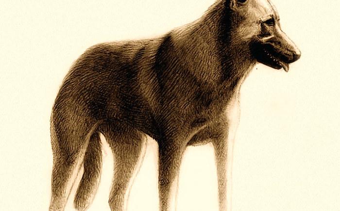 rp_wolfdog.jpg