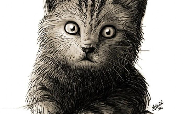 rp_real-cat.jpg