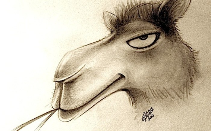 rp_arrogant-camel.jpg
