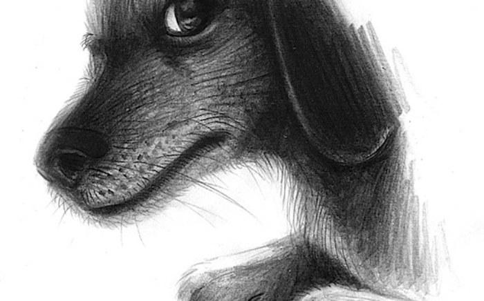 rp_dog-portrait.jpg