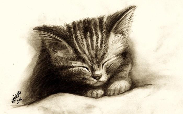 rp_sleeping-kitten.jpg
