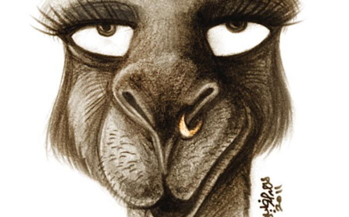 rp_female-camel.jpg