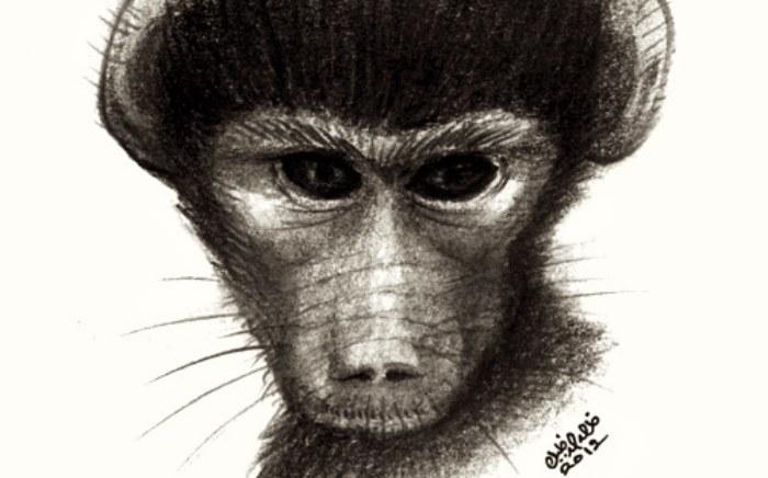 rp_baboon.jpg
