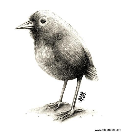 rp_little-bird.jpg