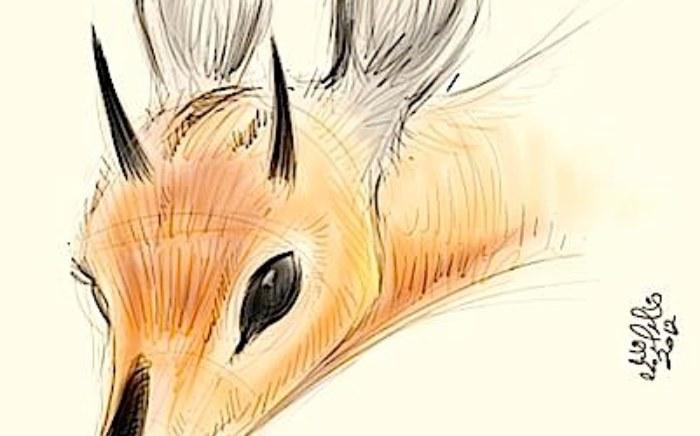 antelope-face