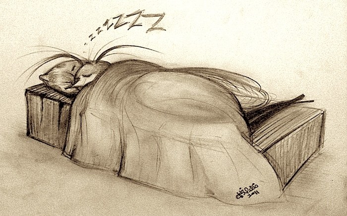 sleeping-insect