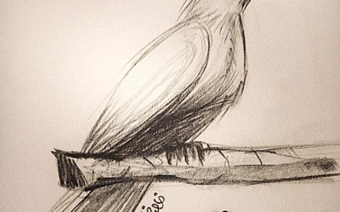 quick-bird-sketch
