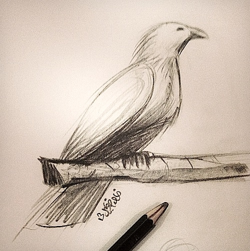 quick-bird-sketch