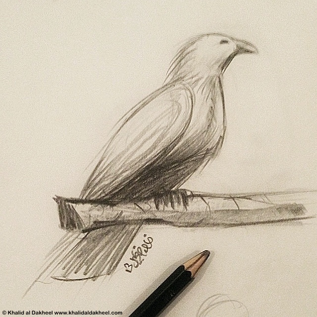 pencil-life-drawing-bird-on-branch